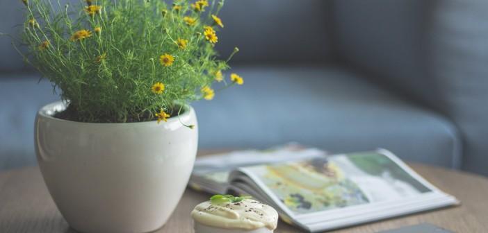 Start a Tiny Garden